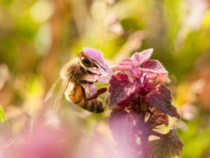ape servizi, andrea pelleriti landscape architecture